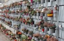 Friedhof Oberi - Urnenwand